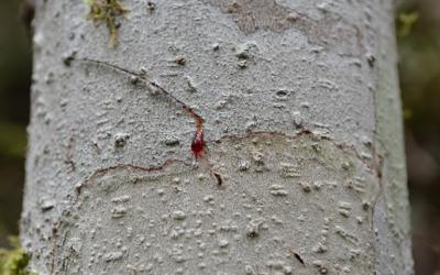 La Sangre de Grado